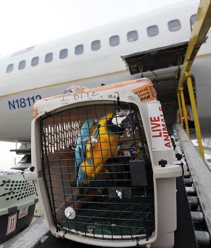Авиаперевозки животных